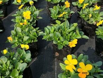 温江近期出台多项花木产业扶持政策