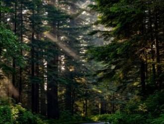 酸性土壤适合种植什么树