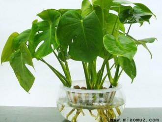 水培植物有哪些注意事项呢
