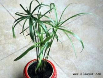 水竹的养殖要求与方法介绍