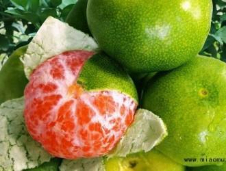 遇到柑橘黄斑病该如何处理呢
