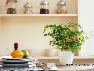室内摆放植物有哪些好处